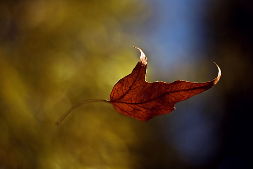 Leaf-Jesse-Kruger-flickr